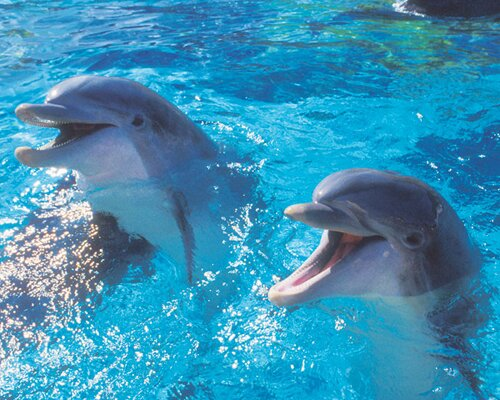 Dolphin facts: Dolphins and favorite food