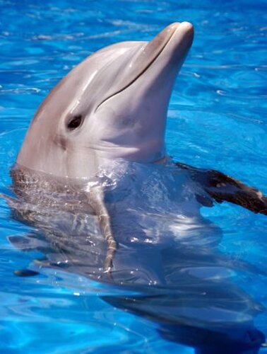 Dolphin facts: Dolphins and human relationship