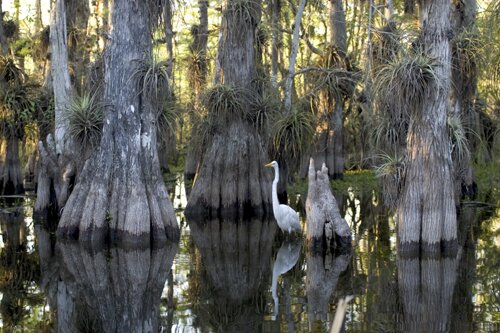 Facts about Florida: The Everglades National Park
