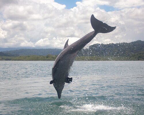 Bottlenose dolphin facts: Big dolphin