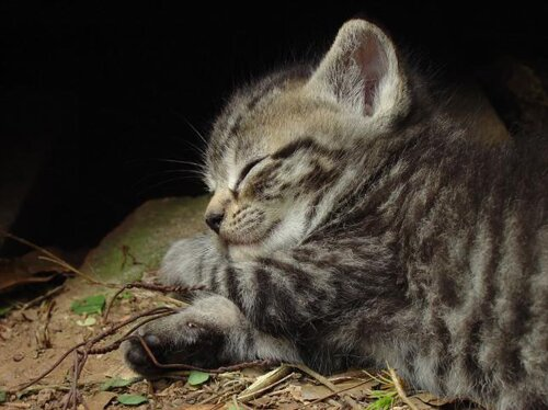 Cat facts: Sleeping cat