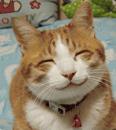Cat facts: smiling cat