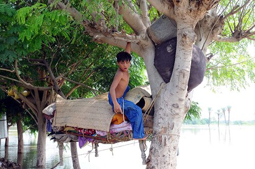 Flood facts: a kid on a tree