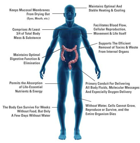 Water facts: Water composition in the body