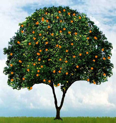 Orange facts: abundant orange
