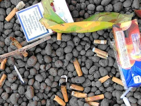 Littering facts: Cigarette butt
