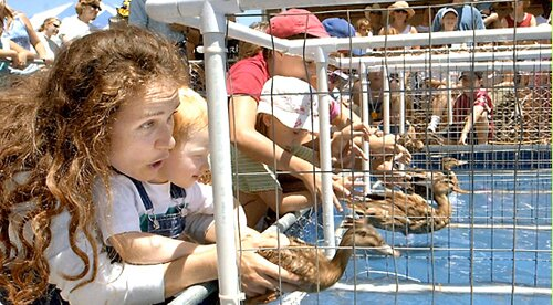 New Mexico facts: duck races