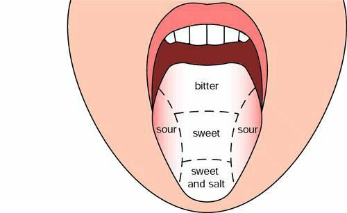 mouth facts: taste zone