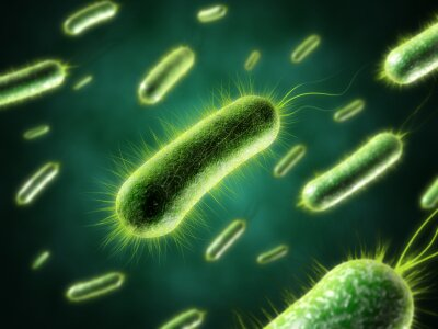 Health facts: bacteria