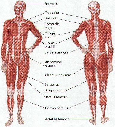 Health facts: human body