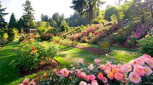 Oregon facts: International Rose Test Garden