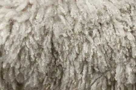 Facts about wool - Fair wool