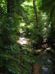 10 Interesting Facts about The Daintree Rainforest