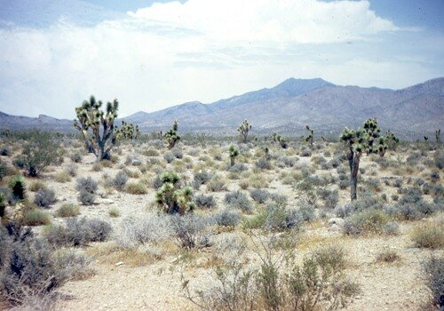 Mojave Desert Pic