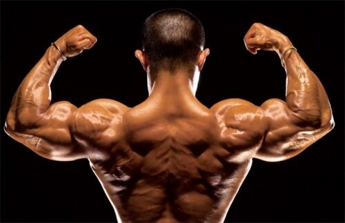 Muscles on Men